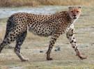 Angola: la caza furtiva provoca la muerte anual de más de 2.000 animales
