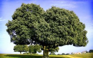 Arbolapp, todos los árboles de España en tu mano