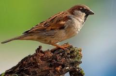 SEO/Birdlife celebrará el día de las aves con actividades para los aficionados a la ornitología
