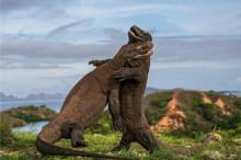 Desveladas 10 finalistas del concurso fotográfico Wildlife Photographer of the Year