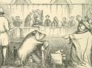 Animales, juzgados como personas