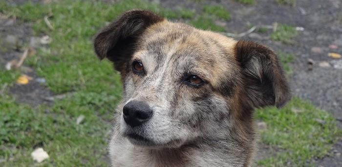 Combatiendo la demencia canina