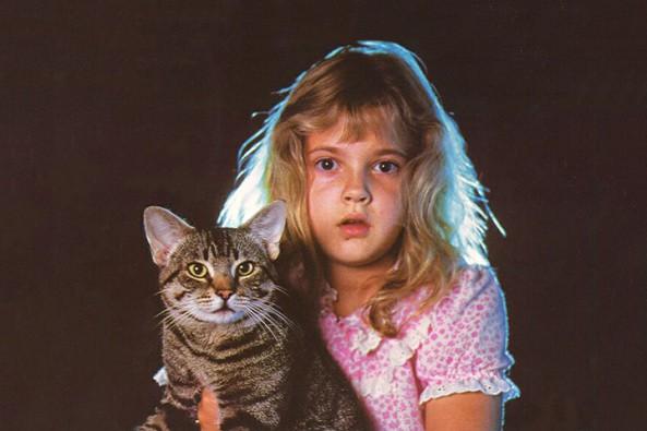 Las 5 mejores películas sobre gatos
