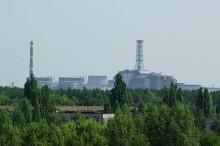 Chernóbil 30 años después: la vida animal se abre camino