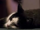 El estrés en los gatos: causas y consejos
