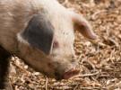 La entrada de animales vivos del Magreb se limita por la fiebre aftosa