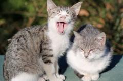 Un estudio confirma que los gatos ancianos no soportan los ruidos agudos