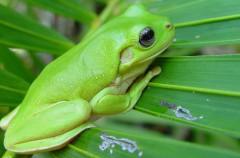 Por qué no hay mamíferos de color verde