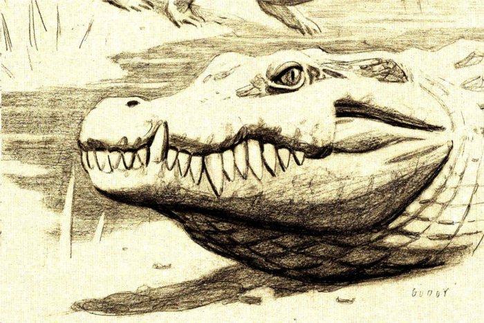 Un cocodrilo de enormes dientes habitó en Cuenca hace 75 millones de años
