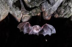 """Una """"raspa"""" de 32.000 euros deja sin protección a los murciélagos españoles"""