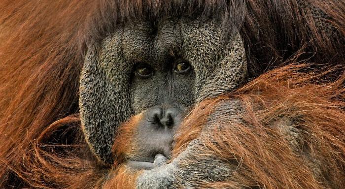 A vueltas con el Cambio Climático: la extinción de grandes animales empeora el asunto