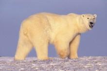 El cambio climático podría aumentar la cantidad de animales híbridos