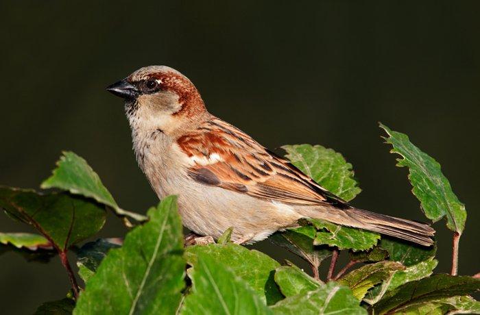 Casi un cuarto de la población de las aves europeas ha desaparecido en los últimos treinta años