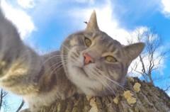 Manny, así es el gato más popular de las redes sociales