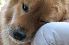 Perros con diabetes: un pequeño repaso a los principales síntomas