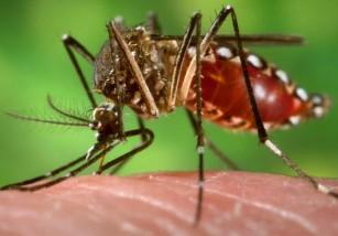 El <em>Aedes aegypti</em> hace de las suyas: varios enfermos de Zika en España