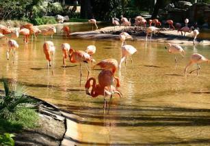 El Zoo de Barcelona es denunciado por asesinar animales sanos recién nacidos