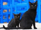 Esta es la manera en que Madrid quiere controlar a los gatos urbanos