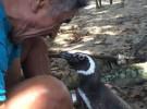 Este pingüino nada 8.000 kilómetros todos los años para ver a su «padre humano»