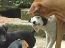 Helene Wirt, utilizando los ahorros para cuidar animales