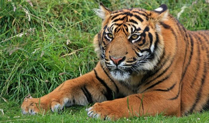 Costa Rica prohíbe los zoológicos y la caza deportiva y anima a dejar estas actividades