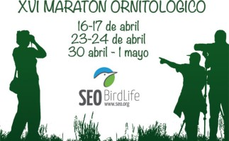 El maratón ornitológico 2016 de SEO/Birdlife ya tiene fechas