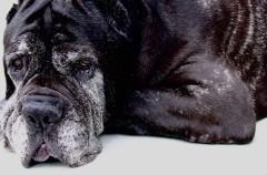Maggie, fallece el perro más viejo del mundo