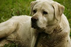 Perros: por qué se revuelcan en lugares sucios