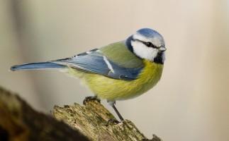Aves y pesticidas, una relación mortal
