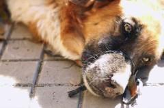Denunciando el maltrato animal mediante Internet