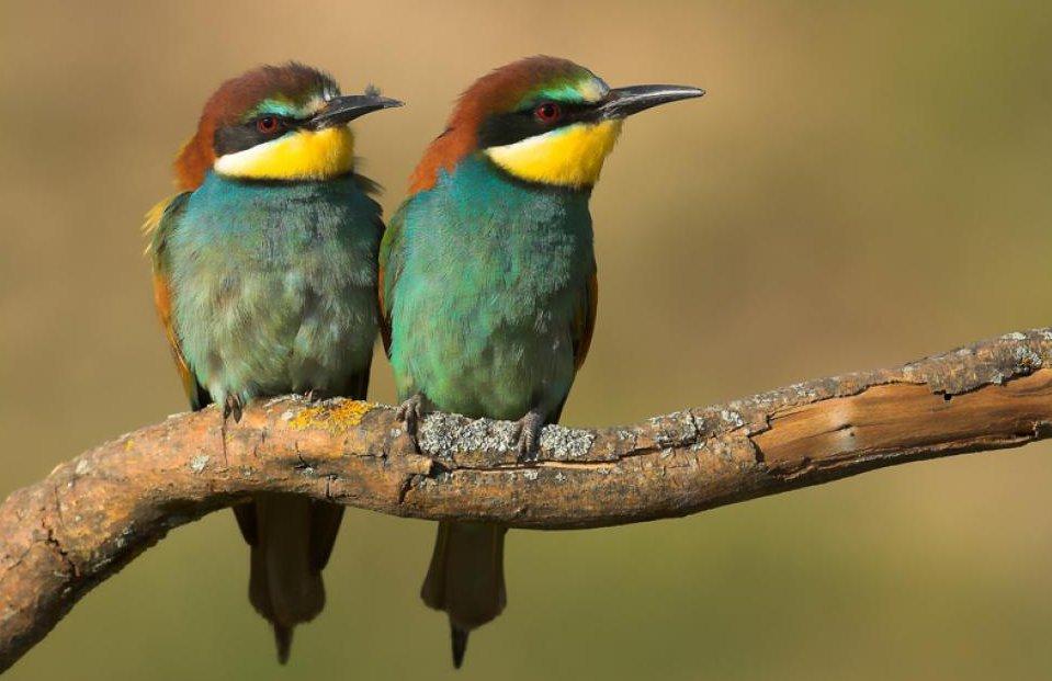 Cinco datos a tener en cuenta tras el Día de las Aves Migratorias