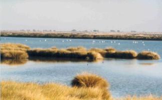 Birdflyaway, la ruta de aves que aspira a ser como el Camino de Santiago
