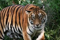 Conoce a las especies más amenazas del mundo (I)