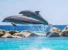 El Acuario Nacional de Baltimore decide liberar a sus delfines