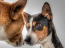 Escalofriante: se abandona una mascota cada cuatro minutos