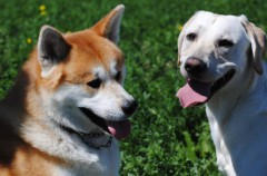 Los perros, la mascota favorita de Latinoamérica
