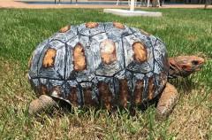 Esta tortuga tiene caparazón gracias a una impresión 3D