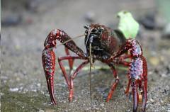 Especies invasoras: la otra gran amenaza para la biodiversidad