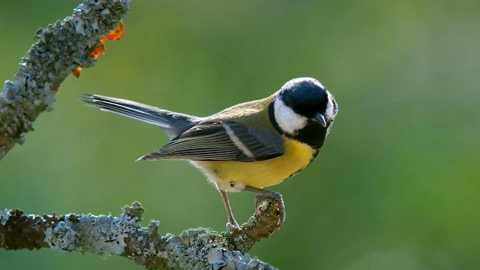 Las aves que habitan en la ciudad viven menos por culpa del estrés