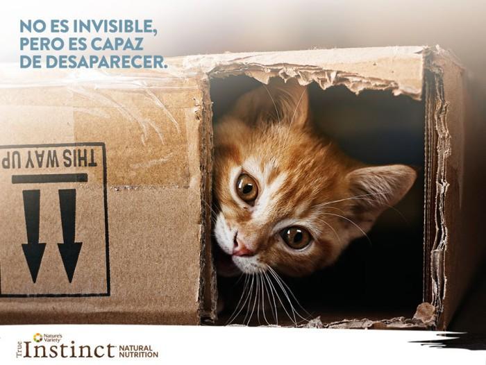 gato-invisible-desaparecer