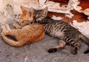 Madrid confirma que será una ciudad que no sacrificará mascotas