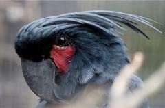 Olas de calor: letales para las aves del desierto