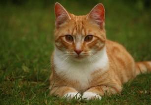 Una gata desaparece en Londres... Y aparece en París ocho años después