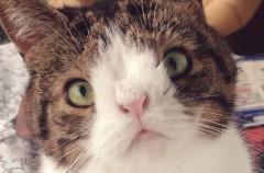 Monty, el gato más famoso de Internet