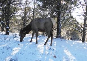 Noruega: aparecen 300 renos muertos por un rayo