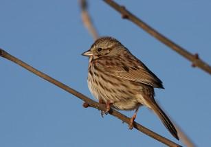 Vivir en la ciudad aumenta la agresividad de las aves