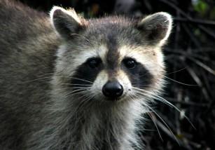 El multimillonario coste que ocasionan las especies invasoras
