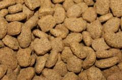Estos alimentos no son recomendables para perros