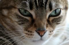 Así ha sido el susto que ha provocado un gato en el Museo Guggenheim de Bilbao