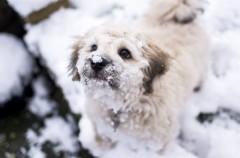 Salvan a una perra que se estaba congelando en una montaña